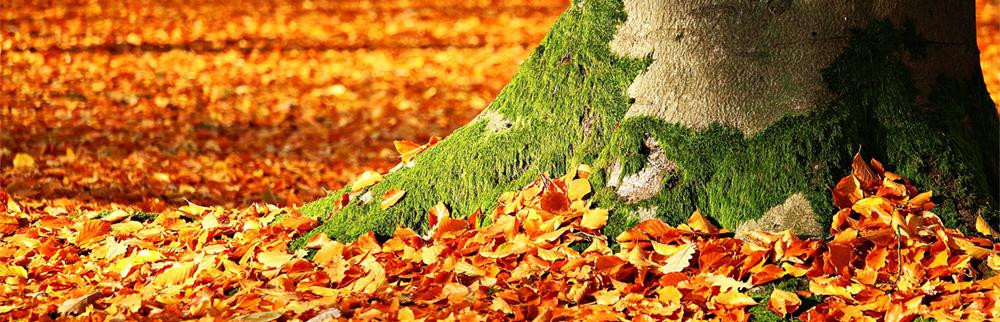 Image d'automne avec feuilles qui tombent et arbre